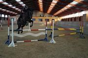 Horse for sale - AVANTI GP W