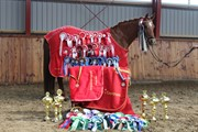 Horse for sale - MALIBU