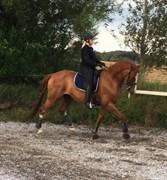 Hest til salg - DALVANGS CAPETTO