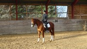 Horse for sale - African Gizmo