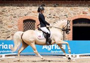 Horse for sale - TOVDAL'S GOLDEN FUTURE IMPERIAL