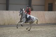 Hest til salg - SPOT THE DOT