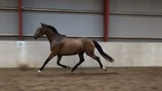 Horse for sale - KULLERUP ATHENA