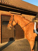 Horse for sale - HERSLEV MARK'S LIWA