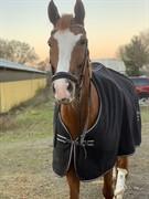 Horse for sale - Bøgevangs Lady Romance