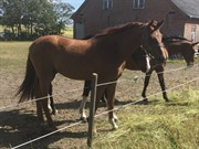 Horse for sale - DIRTHY BOY