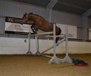 Hest til salg - Kuhlmann's Callisto