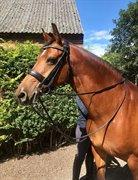 Horse for sale - Pirette
