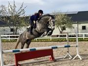 Horse for sale - Ternvigs Nova