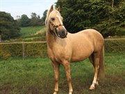 Horse for sale - ICE AGE V.