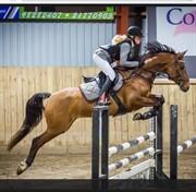 Horse for sale - KARLSHØJGAARD'S MONIQUE