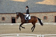 Horse for sale - SALLY Z