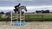 Horse for sale - CALERO-K
