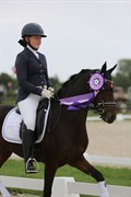 Horse for sale - SS PINPIN