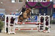 Horse for sale - MEJSTER