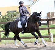 Horse for sale - JOKERS KASHMIR (TOMMY)