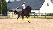 Horse for sale - Zay Hi