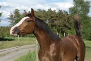 Horse for sale - HAPPY BALIA