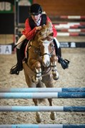 Horse for sale - CLAUSHOLM VOLVO (IR)