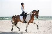 Horse for sale - MONDIAL HOEJGARD