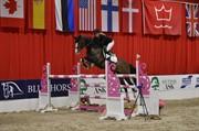 Horse for sale - MASERATI
