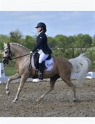 Horse for sale - BAILEY