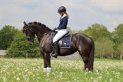 Horse for sale - Rue's Verdi