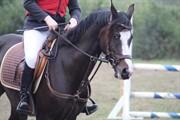 Horse for sale - SS CRELIDA