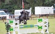 Horse for sale - FABIO
