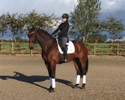 Horse for sale - DENICE