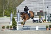 Hest til salg - GRANADA SDS