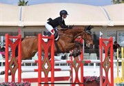 Horse for sale - CAISER CASH 2