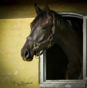 Horse for sale - GRANDALS FAYOLA