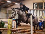 Hest til salg - SPRINGERS SILAS