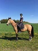 Hest til salg - Josefine