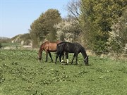 Horse for sale - MY FAVORIT CHOICE