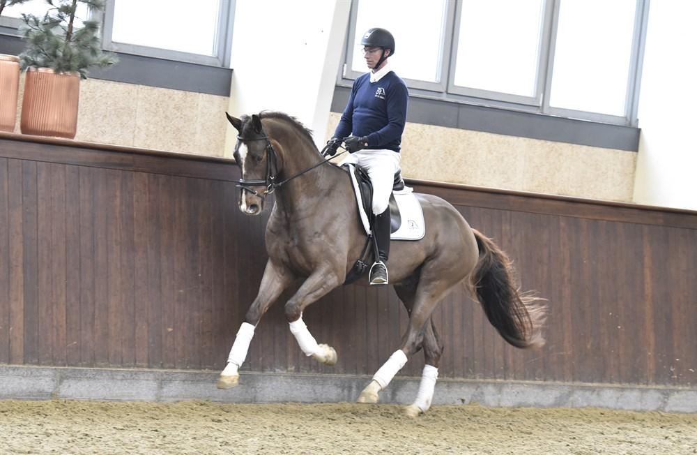 hest pik bordel Danmark