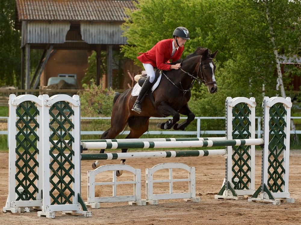 dansk varmblods heste