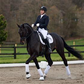 Hest søges at ride