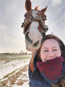 Voksen rytter søger hest