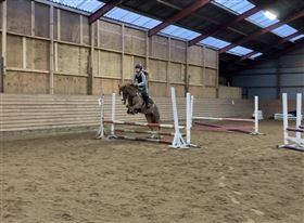 KAT 1 pony søges