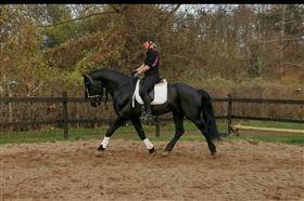 Søger dressur hest at ride