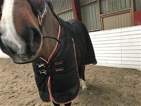Rambo optimo og premier equine  sælges